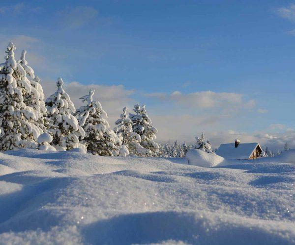Winterwandern in der SkiWelt